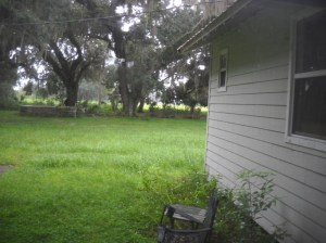 WET DAMP Yard needs mowing