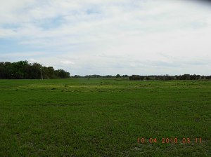 Rolling Meadows- Cows, Fences, Regrowth- 048