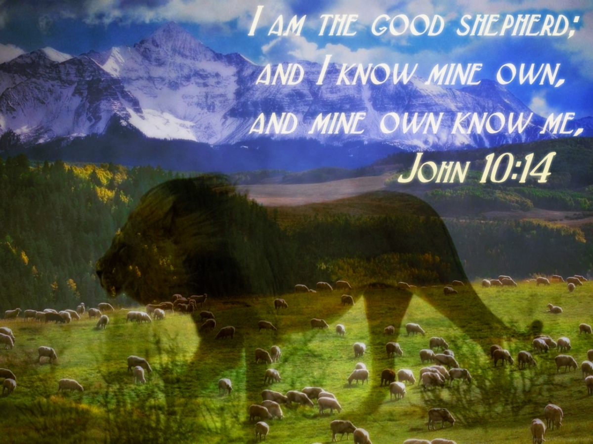 Tuesday's Bible Verse - John 10:4 - October 20, 2015