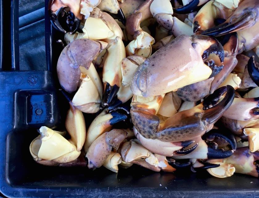 Fresh-Stone-Crab.jpg