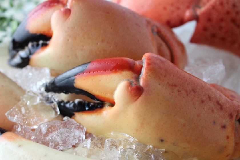 Stone-Crab-Claws.jpg