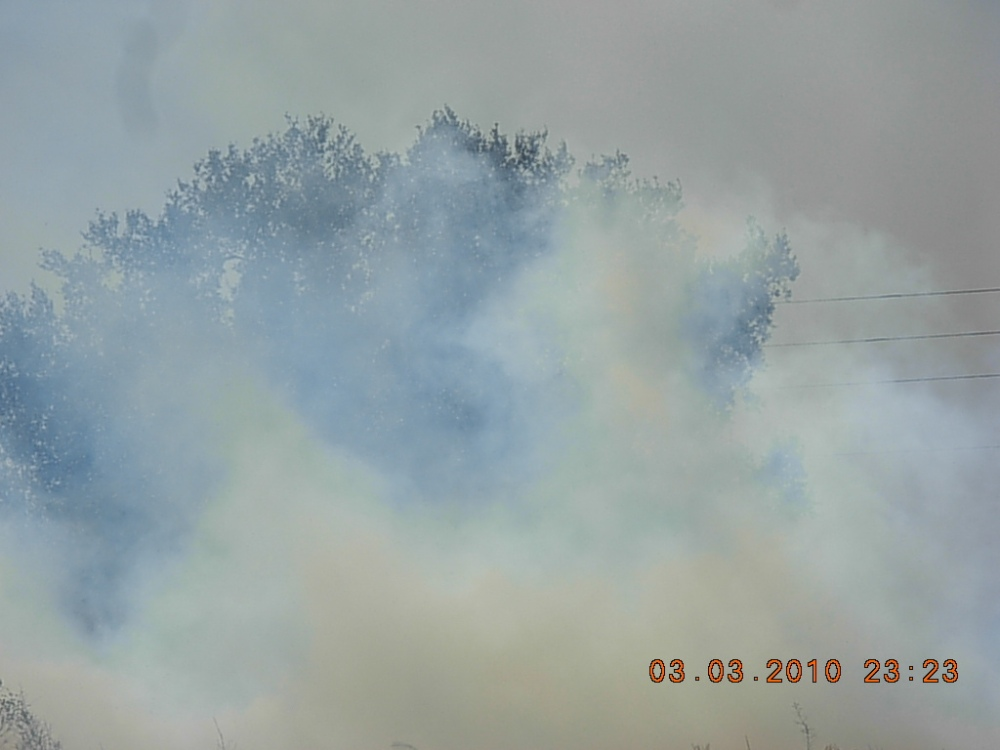 A Prescribed Burn in Our Back Yard